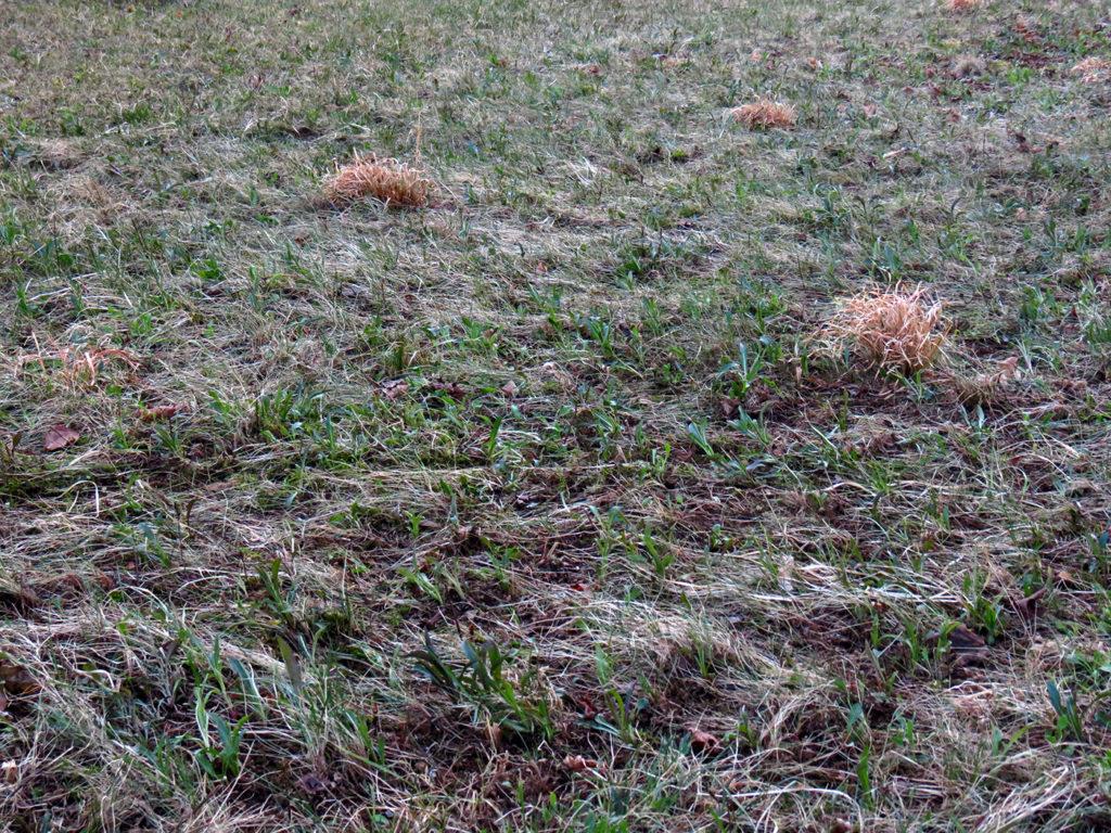 Весенний газон требует ухода