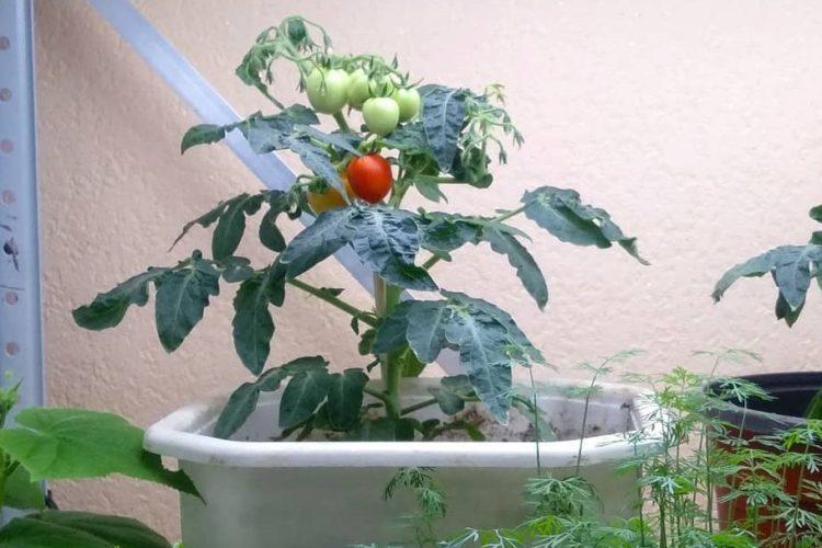 Светодиодная подсветка для растений в домашних условиях