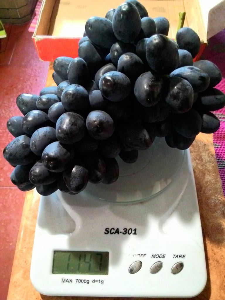 Гроздь винограда Ромбик на весах