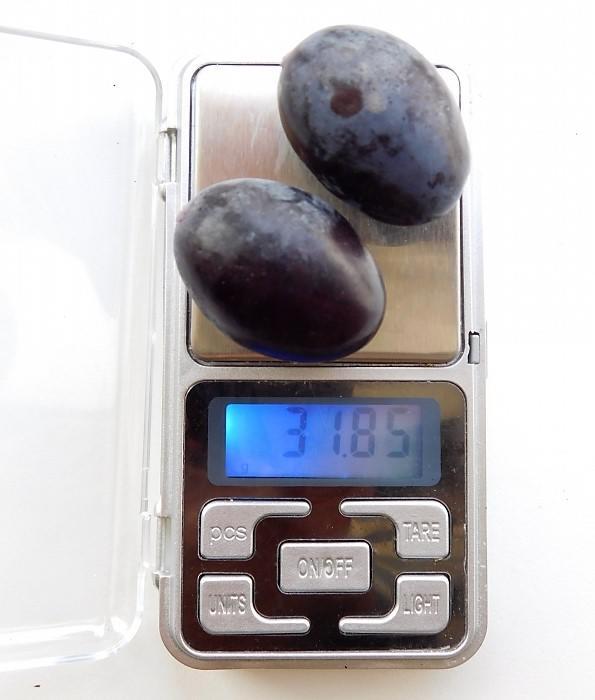 Ягоды винограда Руслан на весах, Валяев Е.Н., г. Белокуриха, Алтайский край
