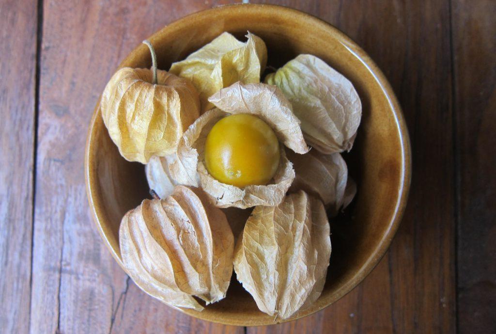 Зрелые плоды физалиса земляничного или опушённого, Physalis pubescens.