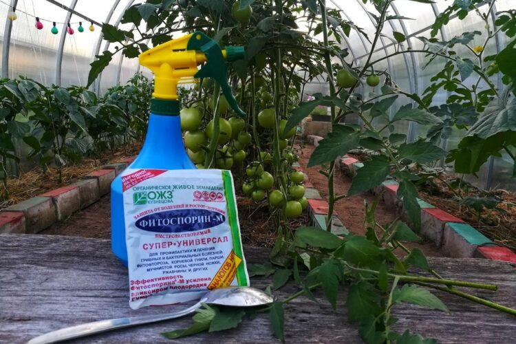 Защита томатов от фитофторы биофунгицидом Фитоспорин.