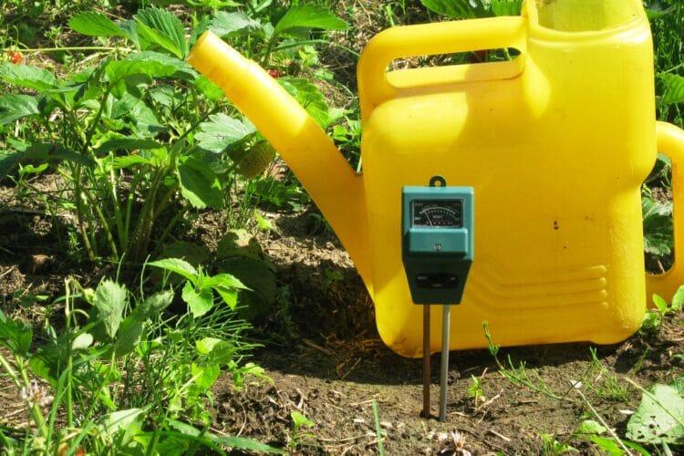 Измерение кислотности почвы на грядке клубники.