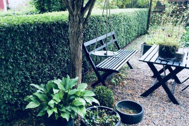 Изгородь из бирючины в саду. Фото: @frodigtochjordigt