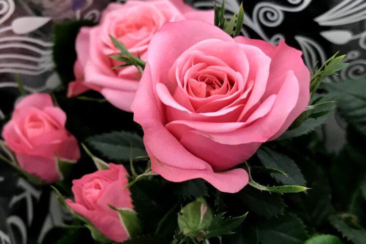 Комнатная роза в горшке.